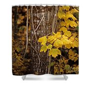 Patterns Of Fall Shower Curtain
