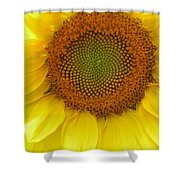 Patterns Of Nature Shower Curtain