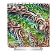 Patterns Underwater Shower Curtain