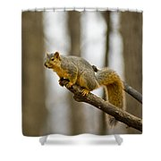 Pause Before Jump Shower Curtain