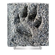 Paw Print Shower Curtain