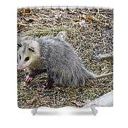 Pawing Possum Shower Curtain