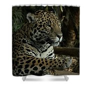 Paws Of A Jaguar Shower Curtain
