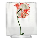 Field Poppy Shower Curtain