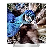 Pea Cock Cock Cock Shower Curtain