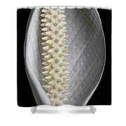 Peace Lily #2 Shower Curtain