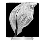 Peace Lily IIi Shower Curtain