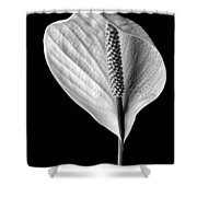 Peace Lily Iv Shower Curtain