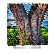 Peace Tree Shower Curtain