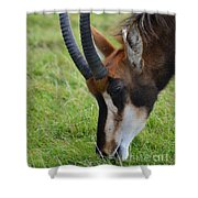 Peaceful Meal Shower Curtain