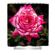 Peaceful Rose Shower Curtain