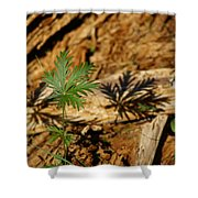 Peaceful Shadow In The Woods Shower Curtain
