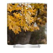 Peacefull Fall Walk Shower Curtain