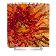 Peach Dahlia Shower Curtain