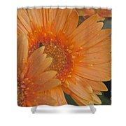 Peach Daisy Cluster Shower Curtain