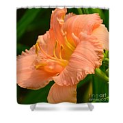 Peach Day Lilly Shower Curtain