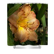 Peach Daylily Delight Shower Curtain