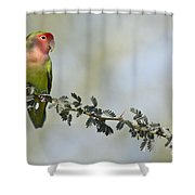Peach Faced Love Bird Shower Curtain