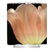 Peach Glow Shower Curtain