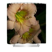 Peach Parfait Daylilies Shower Curtain
