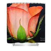 Peach Relish Shower Curtain