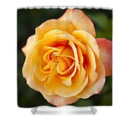 Peach Rose Shower Curtain