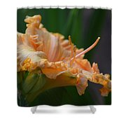 Peach Rufflette - Lily Shower Curtain