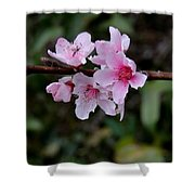 Peach Tree Blooms Miskitos Swoon Shower Curtain