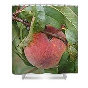 Peach For Harvest   # Shower Curtain