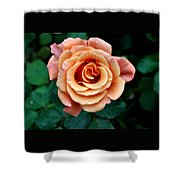Peachesncream Shower Curtain