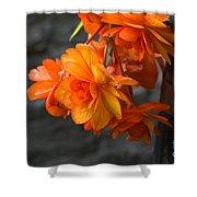 Peachy Begonias Shower Curtain