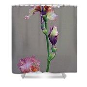 Peachy Prize Winning Iris Shower Curtain