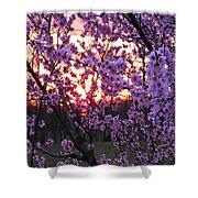 Peachy Sunset 1 Shower Curtain