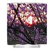 Peachy Sunset 2 Shower Curtain