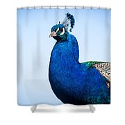 Peacock 1 Shower Curtain