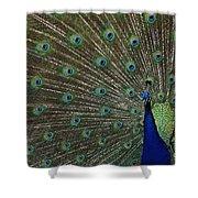 Peacock 17 Shower Curtain