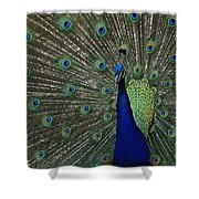 Peacock 18 Shower Curtain