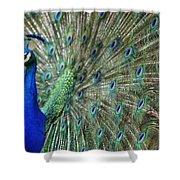 Peacock 21 Shower Curtain