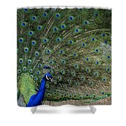 Peacock 8 Shower Curtain