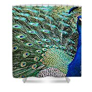 Peacock 9 Shower Curtain