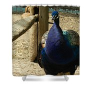 Peacock At The Fence Shower Curtain