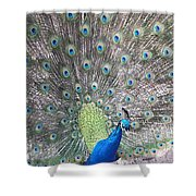 Peacock Bow Shower Curtain