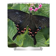 Peacock Butterfly Arizona Shower Curtain