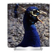 Peacock Caw Shower Curtain