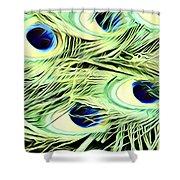 Peacock Colour Shower Curtain