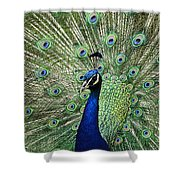 Peacock Display Shower Curtain
