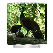 Peacock Family At Capernaum Shower Curtain