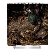 Peacock Family Gathering Shower Curtain