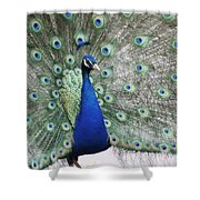 Peacock Fanning Shower Curtain
