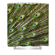 Peacock Feather Abstract Pattern Shower Curtain